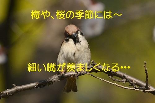 080_2017032219174369a.jpg