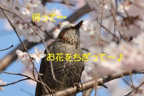 080_20170410183257d4a.jpg