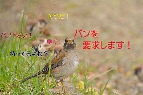 090_20170406190619aee.jpg