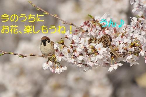 090_20170409212447a8c.jpg