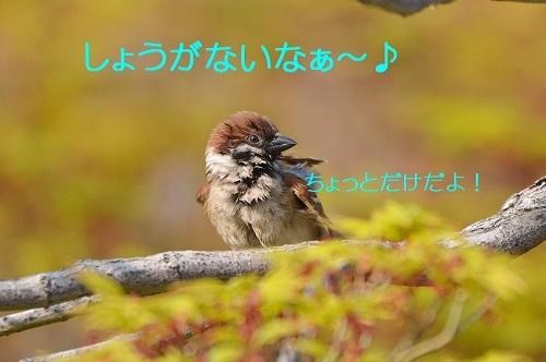 090_20170425200306388.jpg