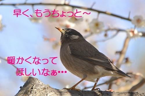 100_2017022419262055b.jpg