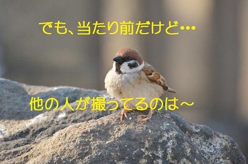 100_20170309194704135.jpg