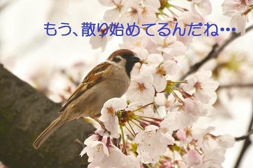 100_20170407182153db6.jpg