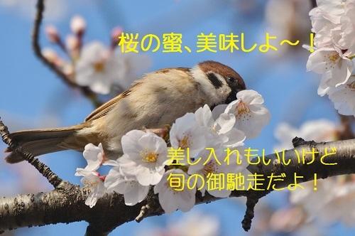 100_20170415213546e1a.jpg