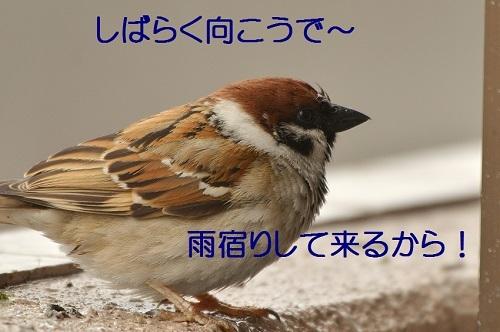 100_20170418192022c98.jpg