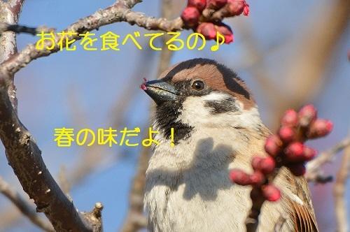 110_20170303185135ddd.jpg