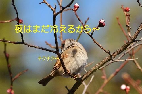 110_20170314184308c4f.jpg