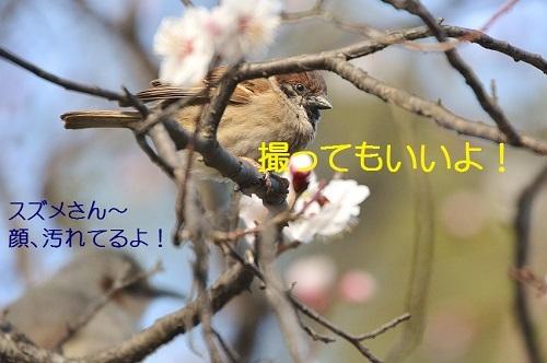 110_2017032419512204c.jpg