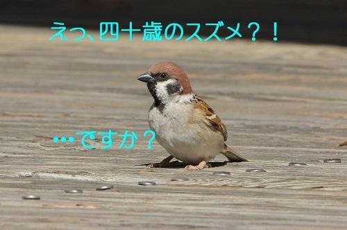 110_201703301924074fa.jpg