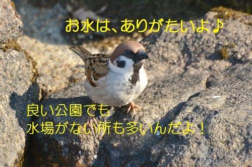 110_20170403195521fd6.jpg