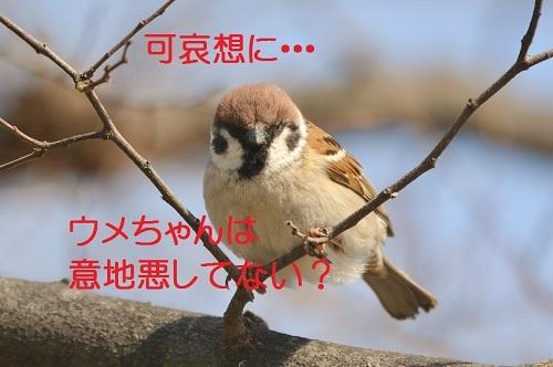 110_201704041923387ff.jpg