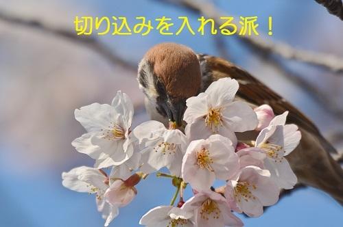 110_20170412191208190.jpg