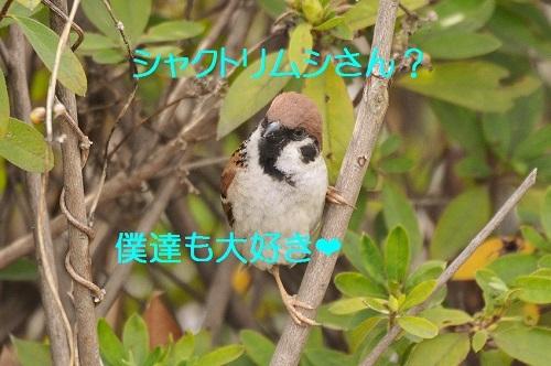 110_20170426013744a0c.jpg