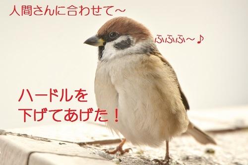 130_201702192038312ac.jpg