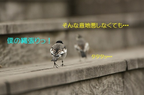 130_20170220191653a5f.jpg