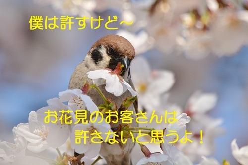 130_20170413190708205.jpg