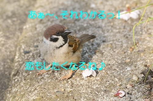 140_20170415213631be7.jpg