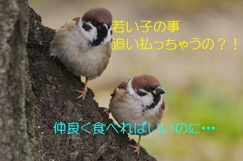 150_2017022019165611b.jpg