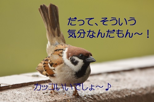 150_20170418192104c08.jpg