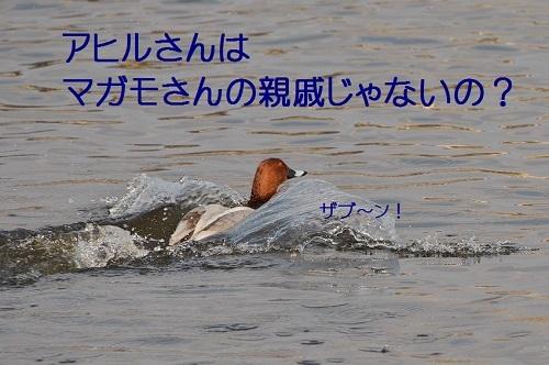 170_201703291940368ec.jpg