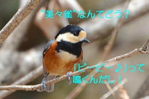 170_201703301924582e5.jpg