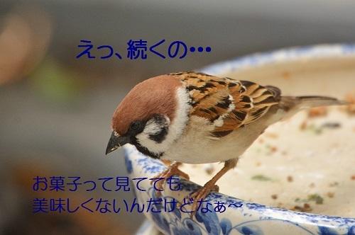 170_20170427205921bdf.jpg