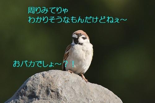 180_201703091947554bb.jpg