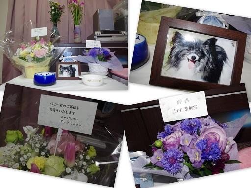 2017-3-14 ぱぴー祭壇ブログ用
