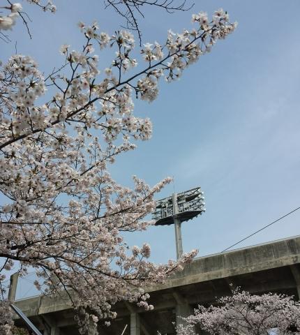 2017-04-09-JAバンク球場桜(2)