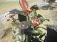 ツバキの花芽