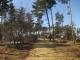 明神池の松林