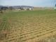 西側の麦畑