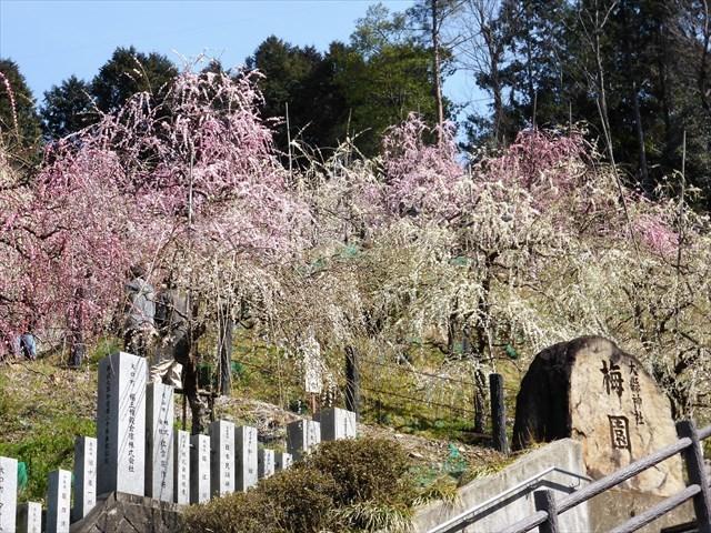 大懸神社豊年祭26