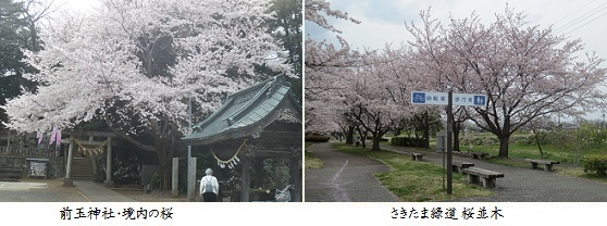 b0406-7n 前玉神社-緑道
