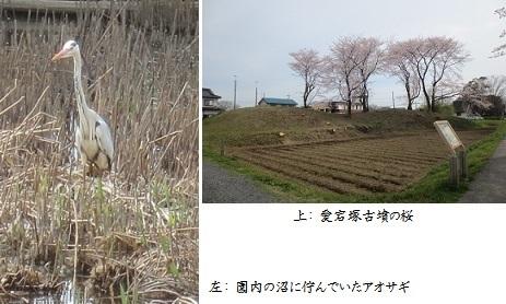 b0406-6 アオサギ-愛宕塚
