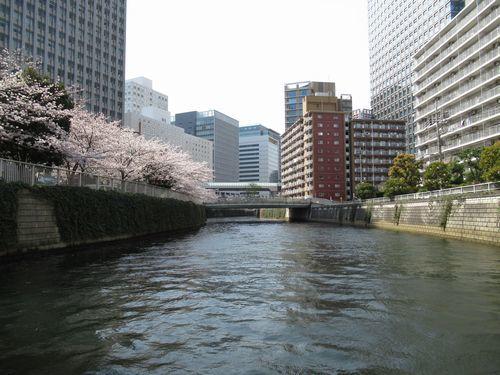 目黒川11