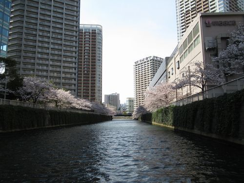 目黒川14