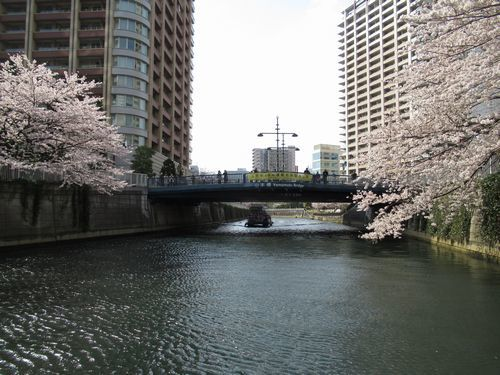 目黒川15