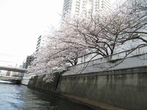 目黒川21