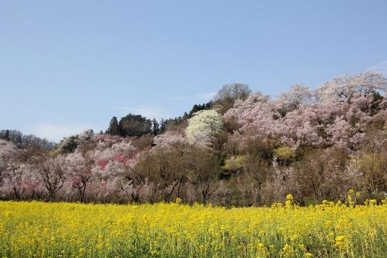 花見山公園入口付近の景観