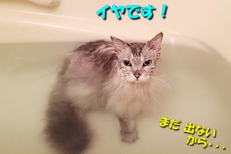 男のムダ毛処理大作戦7
