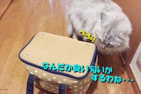静岡の旅13
