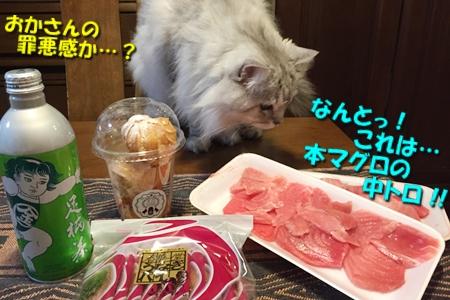 静岡の旅14