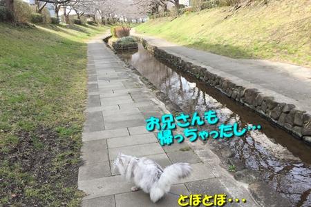 哀愁のお散歩2
