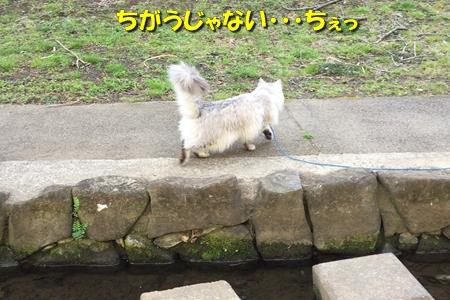 哀愁のお散歩4