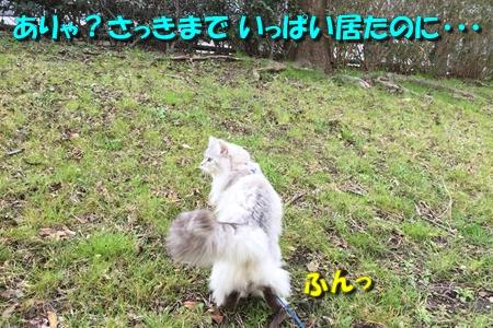 哀愁のお散歩5