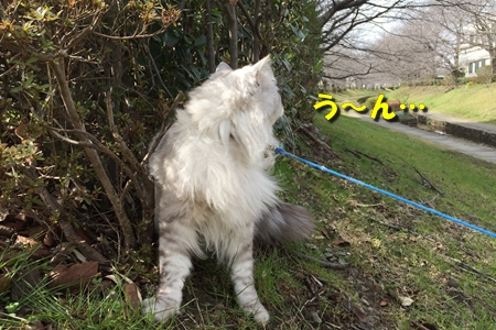 哀愁のお散歩8