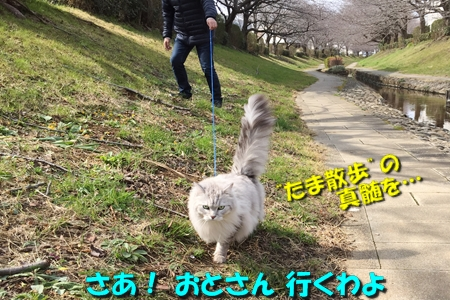 哀愁のお散歩11