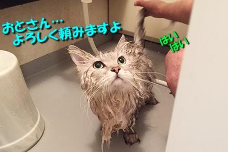 お風呂係は5